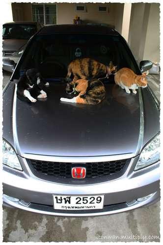 วิธีไล่แมวไม่ให้มานอนบนรถ.....